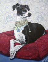 Italian Greyhound on Red Fine-Art Print