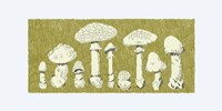Forest Fungi I Fine-Art Print