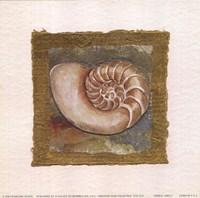 Spiral Shell Fine-Art Print