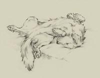 Dog Tired II Fine-Art Print