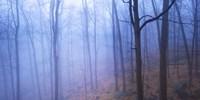 Harriman Woods VI Fine-Art Print
