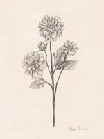 Garden Zinnias II Fine-Art Print