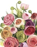 Ranunculus Study I Fine-Art Print
