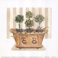 Topiary Tub Fine-Art Print