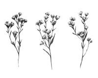 Wild Thistle V Fine-Art Print