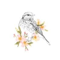 Robin Sketch I Fine-Art Print