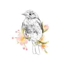 Robin Sketch II Fine-Art Print