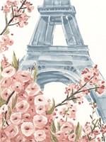 Paris Cherry Blossoms I Fine-Art Print