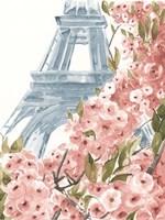 Paris Cherry Blossoms II Fine-Art Print