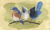 Bird Perch III Fine-Art Print