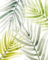 Shady Palm I Fine-Art Print