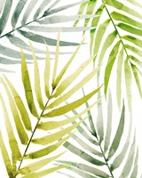 Shady Palm II Fine-Art Print