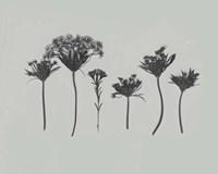 Wildflower Memory I Fine-Art Print