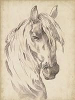Horse Portrait Sketch I Fine-Art Print