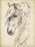 Horse Portrait Sketch II Fine-Art Print