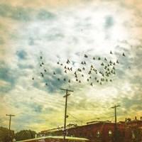 Birds on Wires V Fine-Art Print