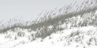 Lush Dunes I Fine-Art Print