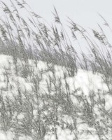 Lush Dunes III Fine-Art Print
