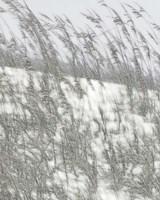 Lush Dunes VI Fine-Art Print