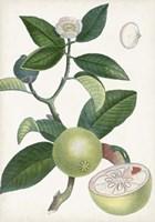 Turpin Tropical Fruit XI Fine-Art Print