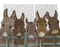 Donkey Herd at Fence Book Print Fine-Art Print