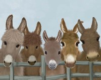Donkey Herd at Fence Fine-Art Print