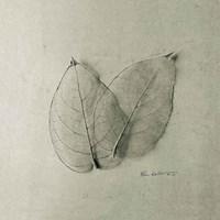 Pair of Skeleton Leaves Fine-Art Print