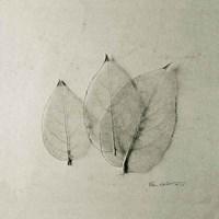 Trio of Skeleton Leaves Fine-Art Print