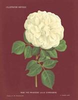 Yellow Rose Pomegranate Fine-Art Print