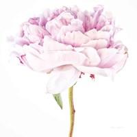 Single Pink Peony Fine-Art Print