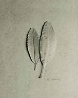 Serrated Duo Fine-Art Print