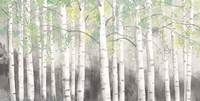 Soft Birches Charcoal Fine-Art Print