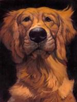 Golden Fine-Art Print