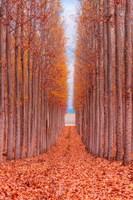 Tree Farm Fine-Art Print
