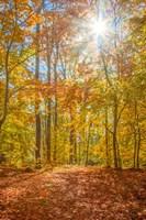 Autumn Forest Fine-Art Print