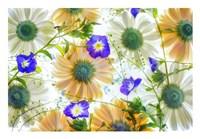 Gerbera flowers and Blue Ensign Fine-Art Print