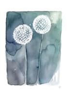 Stardusts Fine-Art Print