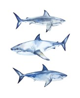 Great Whites Fine-Art Print