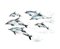 Common Dolphin Fine-Art Print