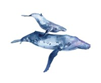 Mother & Calf Humpback Fine-Art Print