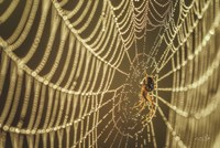 The Spider and Her Jewels Fine-Art Print