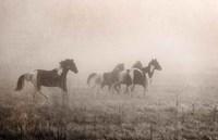 Paint Horses on the Run Fine-Art Print