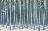 Shimmering Birches Fine-Art Print