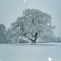 Winter Landscape III Fine-Art Print