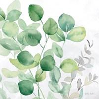 Eucalyptus Leaves II Fine-Art Print