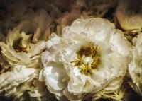 White Flowers Fine-Art Print