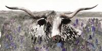 Longhorn in Flower Field Fine-Art Print