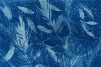 Cyanotype Tropical VII Fine-Art Print