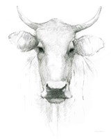 Cow Sketch Fine-Art Print