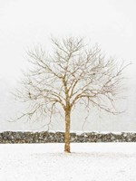 By the Stone Wall Fine-Art Print